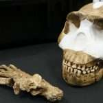 Huge Discovery As 'New Species Of Human' Found In South Africa