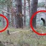 5 Creepiest Things Found in the Woods