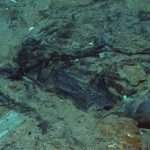 Human Remains Found At Titanic Shipwreck Site, Officials Claim