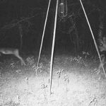 Angels Fairies Ghosts and Demons All Caught On Deer Cams